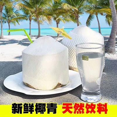 海南省文昌市文昌市海南嫩椰 2.5 - 3斤