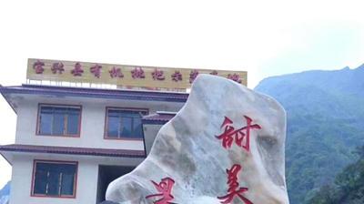 四川省雅安市宝兴县大五星枇杷 1.2两
