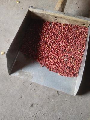 湖北省十堰市茅箭区红小豆 纯粮率≥95% 散装