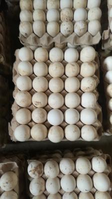 陕西省西安市高陵县土鹅蛋 食用 散装