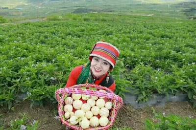云南省昆明市石林彝族自治县花果 4 - 5两以上