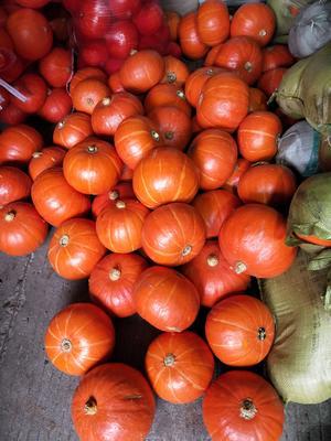 上海青浦区日本南瓜 4~6斤 扁圆形