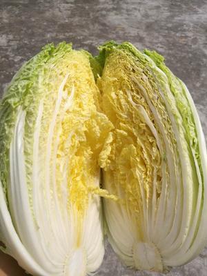 湖北省宜昌市长阳土家族自治县韩国黄心白菜 3~6斤 毛菜