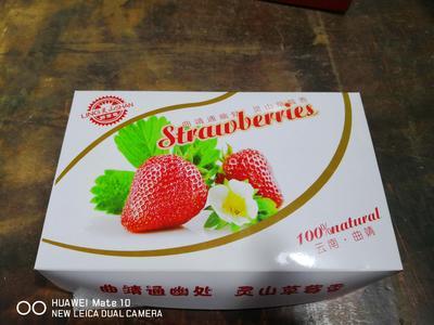 云南省曲靖市麒麟区蒙特瑞草莓 20克以上