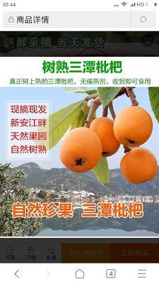 安徽省黄山市徽州区枇杷膏制品 18-24个月