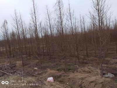 山东省临沂市罗庄区普通水杉