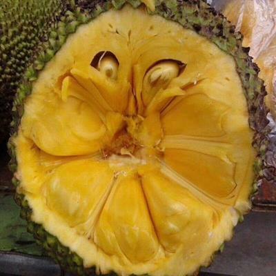 广西壮族自治区崇左市龙州县泰国菠萝蜜 10斤以下
