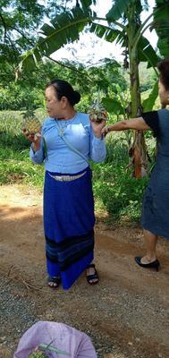 广东省广州市白云区泰国小菠萝 1 - 1.5斤