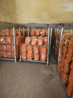 河南省开封市开封县长红胡萝卜 10~15cm 2两以上 3~4cm