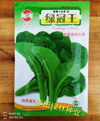 福建省漳州市南靖县青梗菜种子