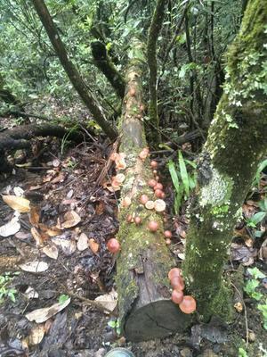 云南省大理白族自治州永平县蘑菇
