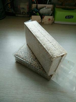 山西省忻州市五寨县白藜麦