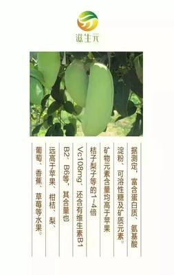 贵州省黔西南布依族苗族自治州安龙县天紫二号八月瓜 种植 60-70g