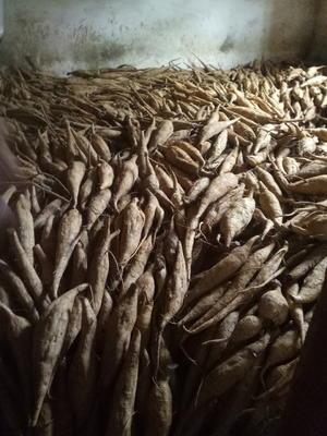 广西壮族自治区桂林市平乐县人工种植葛根 1.5-2.0斤