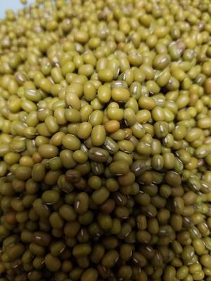 陕西省西安市长安区进口绿豆 袋装 1等品