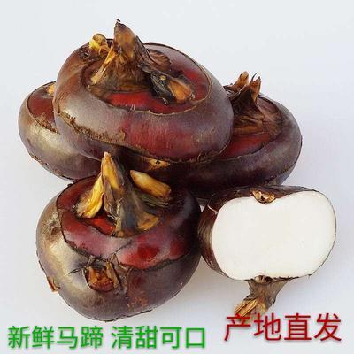 广西壮族自治区桂林市荔浦县荔浦马蹄 大号