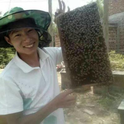 广西壮族自治区贵港市桂平市土蜂蜜 塑料瓶装 100% 2年