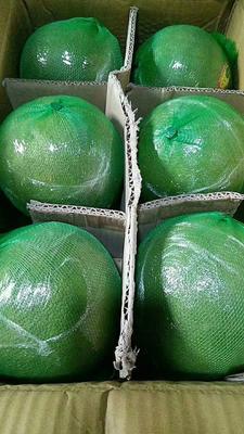 广西壮族自治区崇左市凭祥市金柚 2.5斤以上