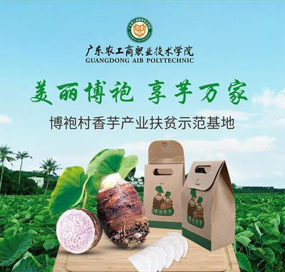广东省湛江市雷州市槟榔芋 6cm以上