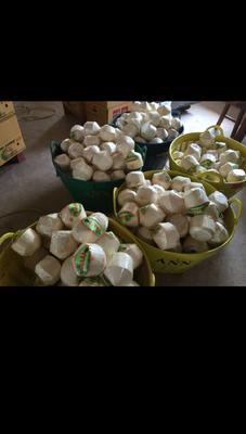 广东省广州市白云区泰国香水椰 1 - 1.5斤