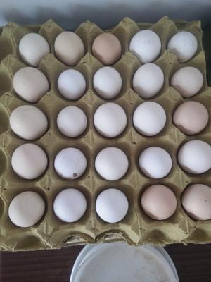 河北省衡水市冀州市柴鸡蛋 食用 箱装