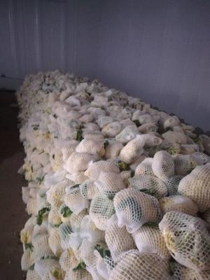 河北省张家口市万全县松花菜 适中 1~2斤 乳白色