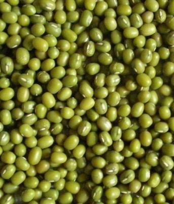 云南省德宏傣族景颇族自治州瑞丽市进口绿豆 袋装 1等品