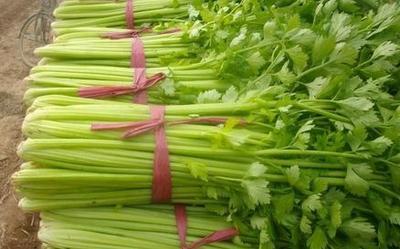 山东省滨州市博兴县西芹 60cm以上 露天种植 0.5斤以下