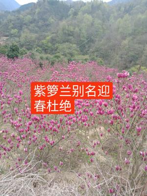 安徽省安庆市岳西县和谐系列
