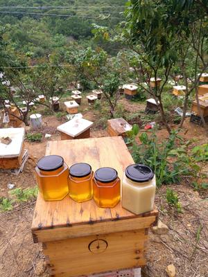 广东省深圳市宝安区土蜂蜜 桶装 100% 2年以上