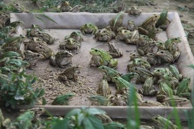 浙江省丽水市云和县青蛙