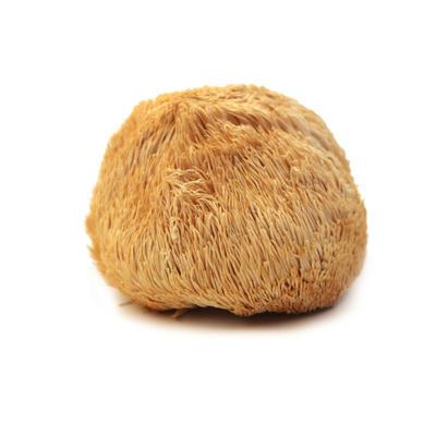 山东省德州市德城区古田猴头菇 7~9cm