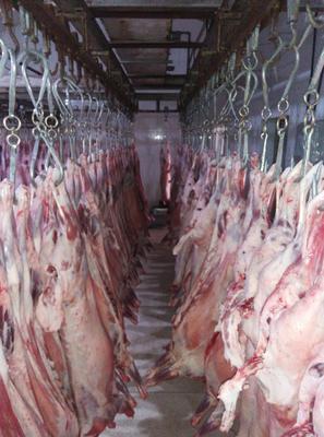 内蒙古自治区赤峰市喀喇沁旗白条羊 生肉