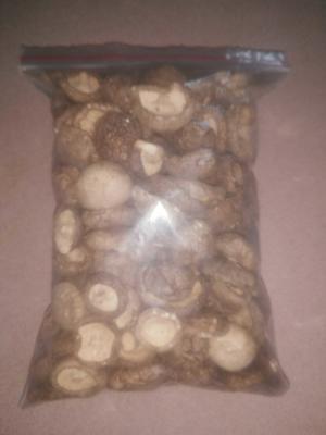 广东省梅州市蕉岭县椴木菇 袋装 1年以上