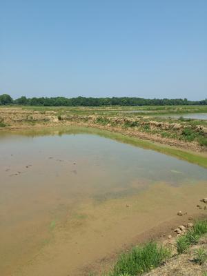 江西省抚州市东乡县优质水塘