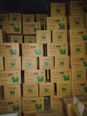 河北省石家庄市赵县皇冠梨 350-400g 70mm以上
