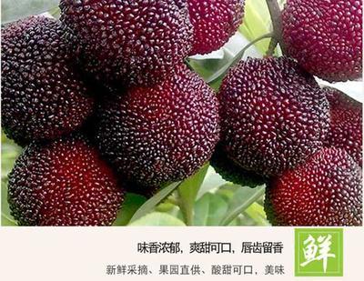 浙江省台州市临海市东魁杨梅 2.5 - 3cm