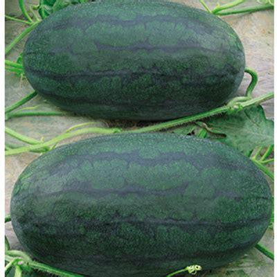 这是一张关于黑美人西瓜 有籽 1茬 8成熟 6斤打底的产品图片
