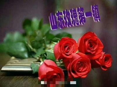 山东省日照市莒县切花玫瑰