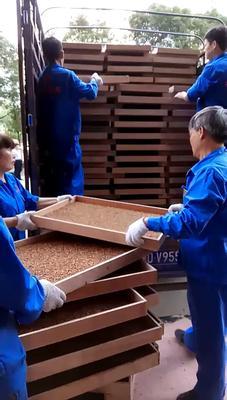 湖南省衡阳市衡阳县黄粉虫