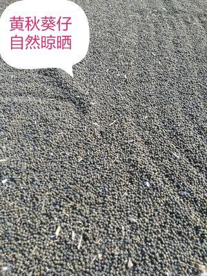 广西壮族自治区来宾市兴宾区黄秋葵初榨油