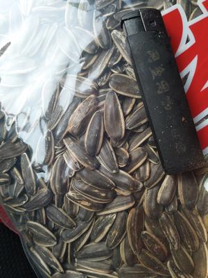 山东省枣庄市市中区363葵瓜子 袋装
