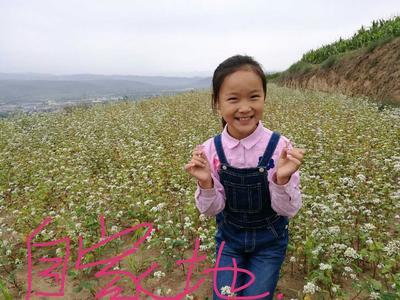 宁夏回族自治区固原市彭阳县苦荞麦