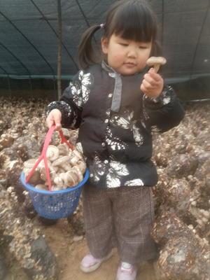 河南省平顶山市舞钢市光面菇9608 散装 1年以上