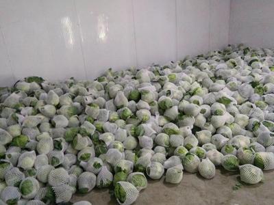 山西省晋中市祁县绿甘蓝 1.0~1.5斤