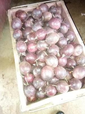 这是一张关于紫色百香果 90 - 100克的产品图片