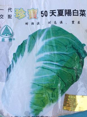 河南省周口市项城市二代精选日本夏阳白菜 大田用种