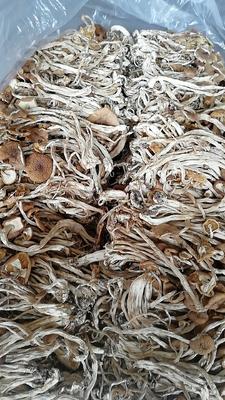 江西省抚州市广昌县干茶树菇 箱装 1年以上