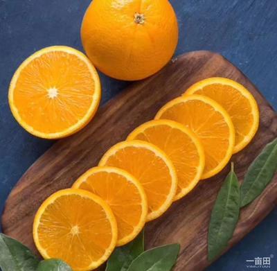 湖北省宜昌市夷陵区秭归脐橙 60 - 65mm 4-8两