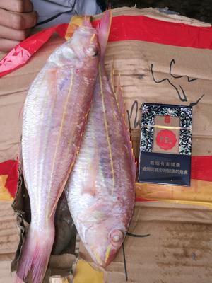 广西壮族自治区北海市海城区金线鱼 野生 0.5公斤以下